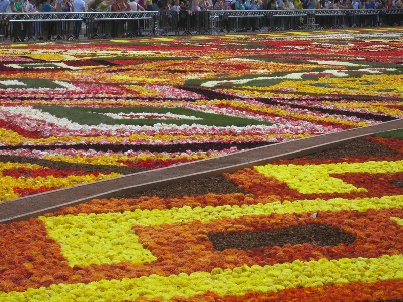 Цветочный ковер на Гран-Плас