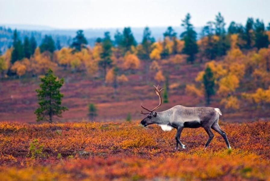 5 лучших мест для отдыха в ноябрьские праздники