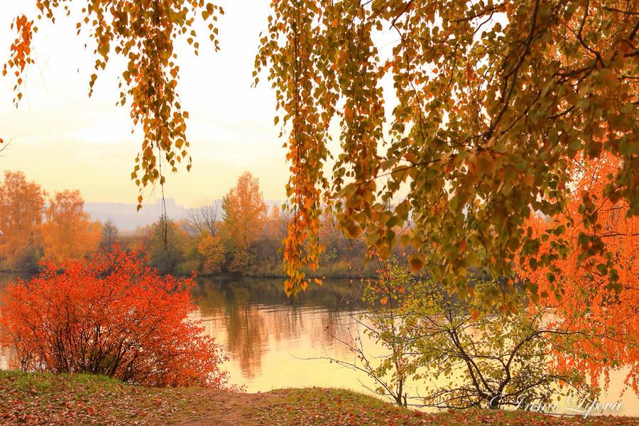 Чудесная яркая осень