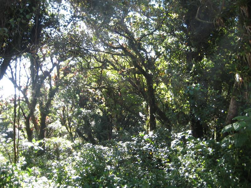 Национальный парк Поас-Волькано