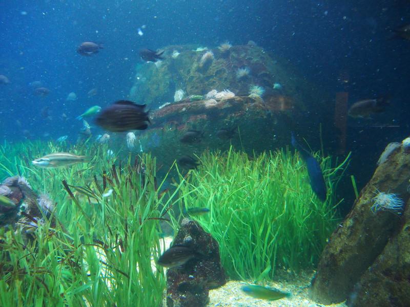 Океанографический парк, Валенсия