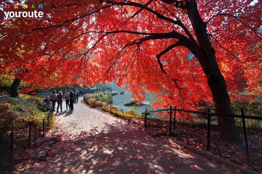 Осень в Центральном Парке