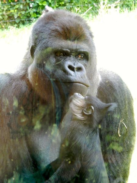 Зоопарк в Керкраде