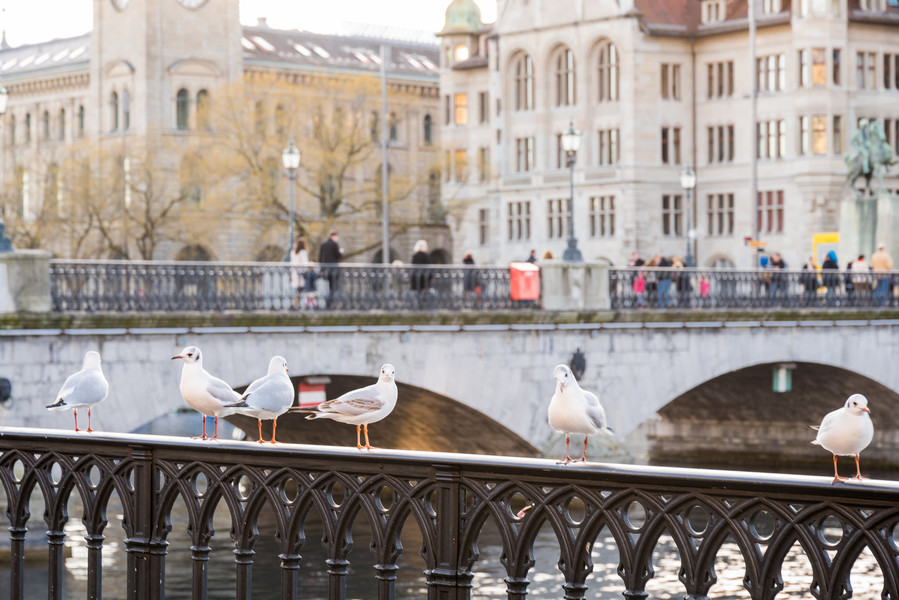 По-весеннему теплый декабрьский Цюрих