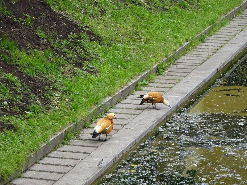 Воскресная прогулка по Патриаршим прудам