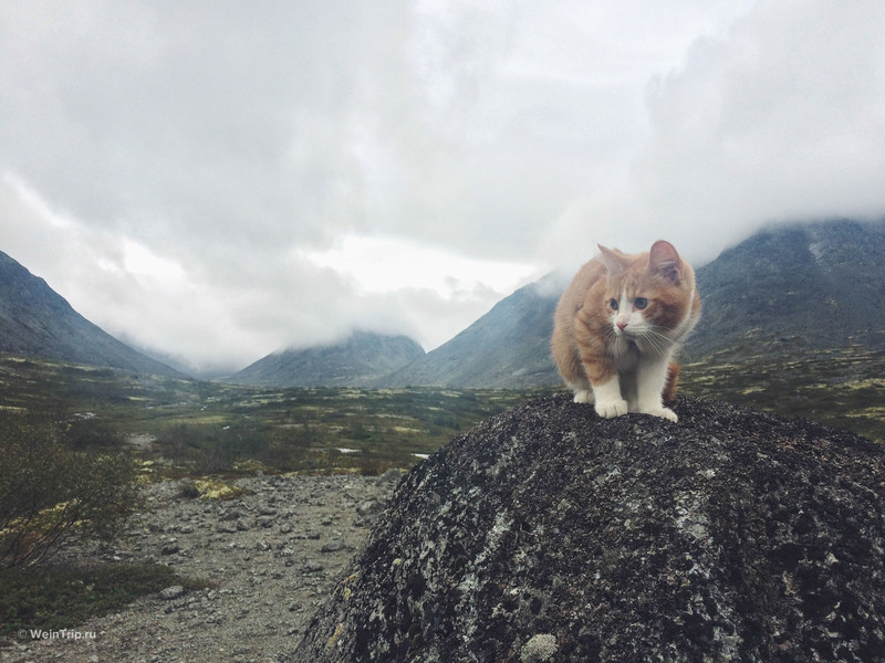 Поход в горы с котом