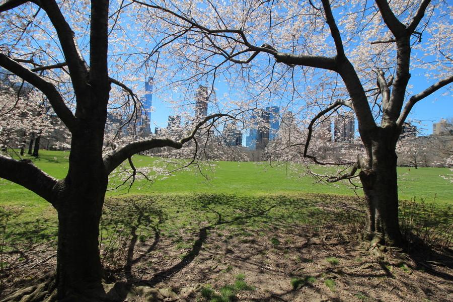Центральный парк Нью-Йорка в апреле