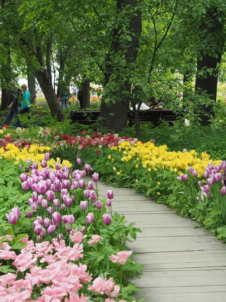 Прогулка по Ботаническому саду МГУ, май 2017