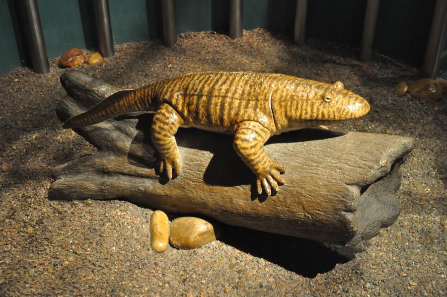 Королевский Тиррелловский палеонтологический музей. Канада, ноябрь-2017