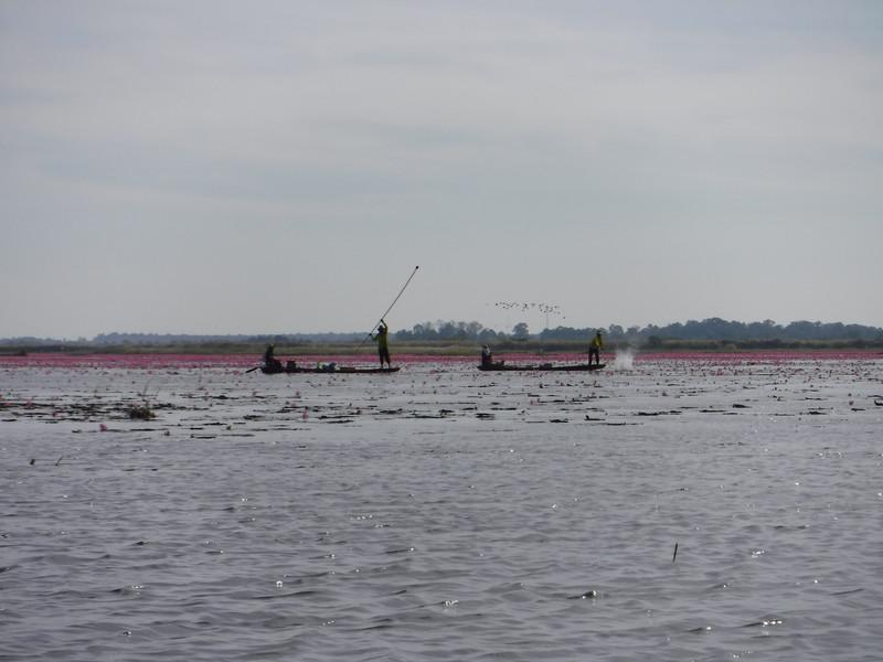 Озеро Красных Лотосов, Тайланд