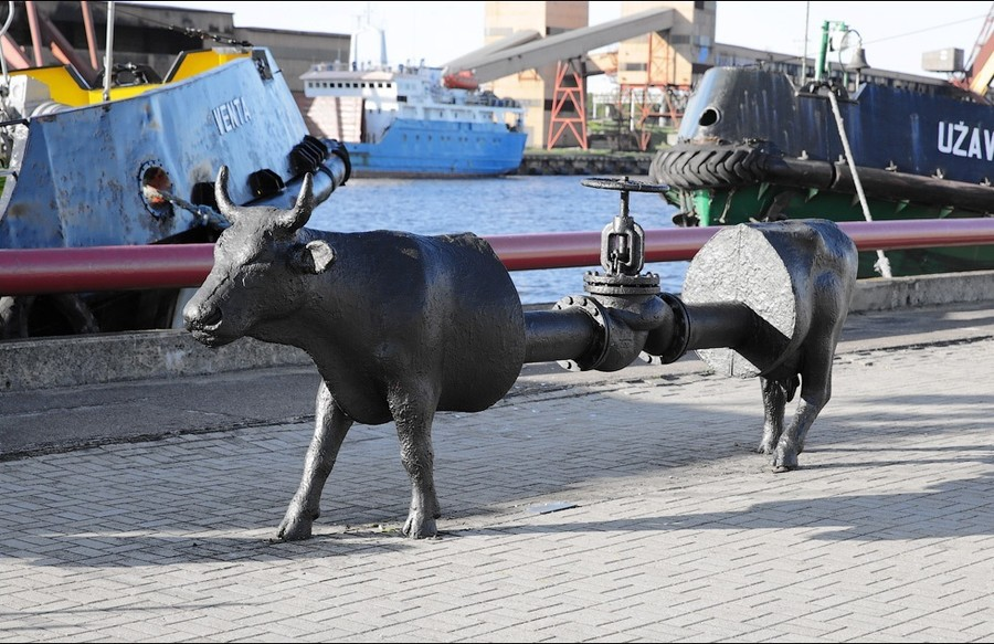 Коровы в городе Вентспилс