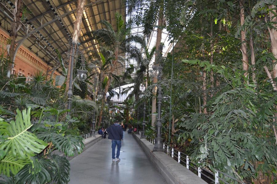Ботанический сад на вокзале Аточа в Мадриде