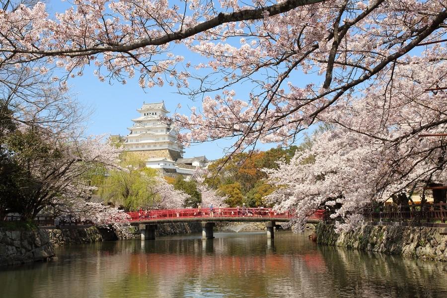 Цветение сакуры в окрестностях замка Химэдзи