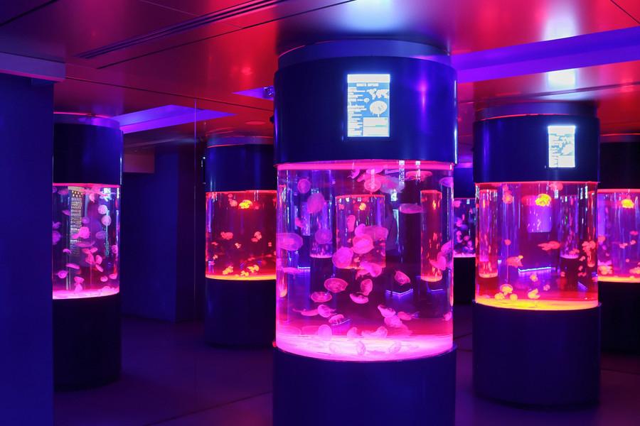 Музей медуз в Киеве. Один из самых необычных, что я видела