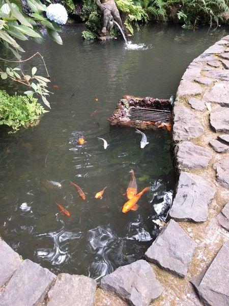 Тропический сад дворца Монти на Мадейре