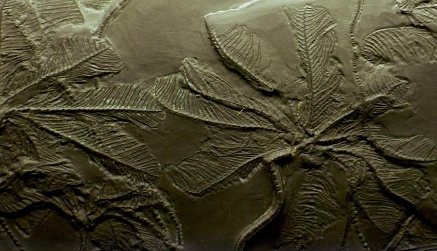 Музей естествознания в Майнце
