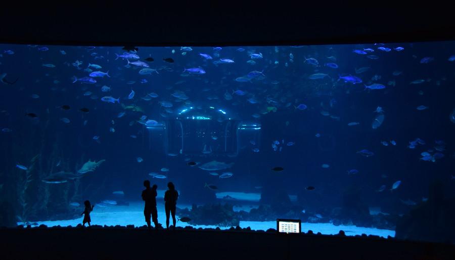 Океанариум Поэма дель Мар, Гран Канария