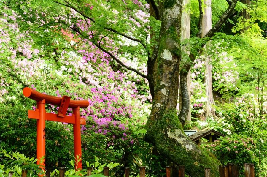 Японский сад храма Азалии