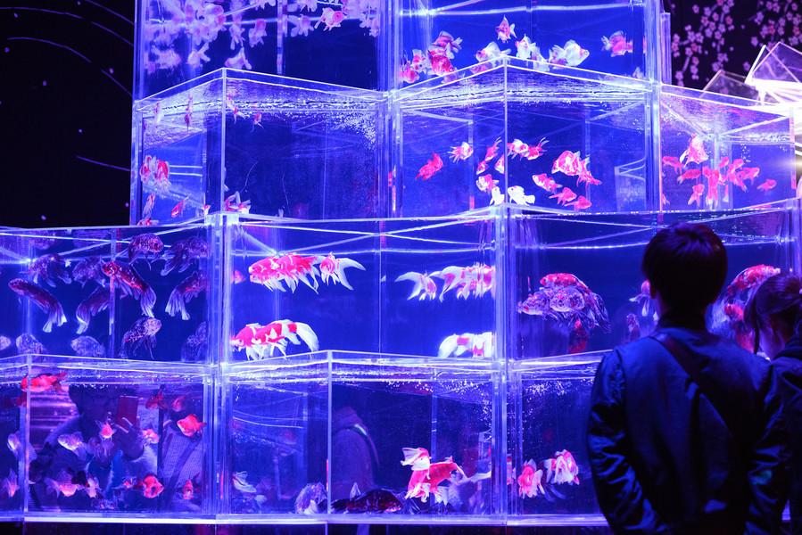 Выставка аквариумного искусства в Фукуоке
