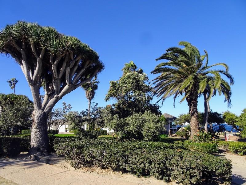 Ла-Холья. Район калифорнийского города Сан-Диего