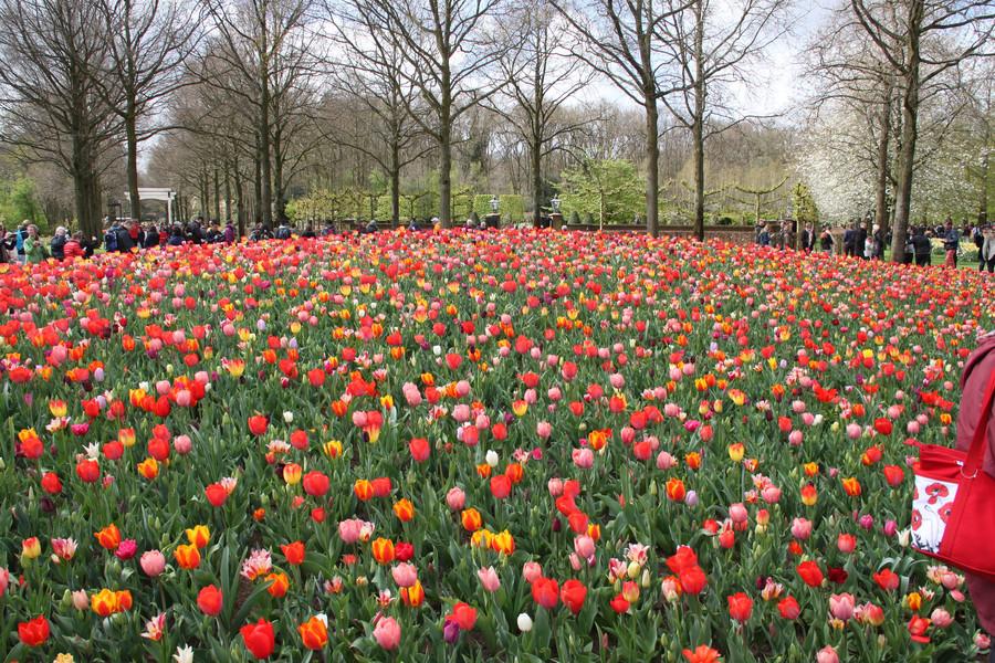 Кёкенхоф - самый весенний парк Европы