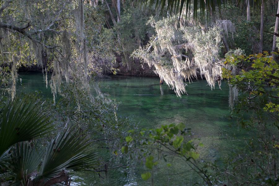 Государственный парк Blue Spring
