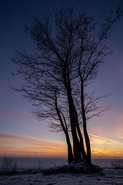 Закат в парке. Сестрорецк
