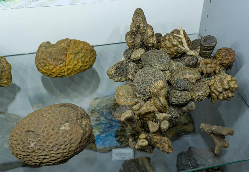 Палеонтологический музей имени В. Вербицкого. Ялта. Крым