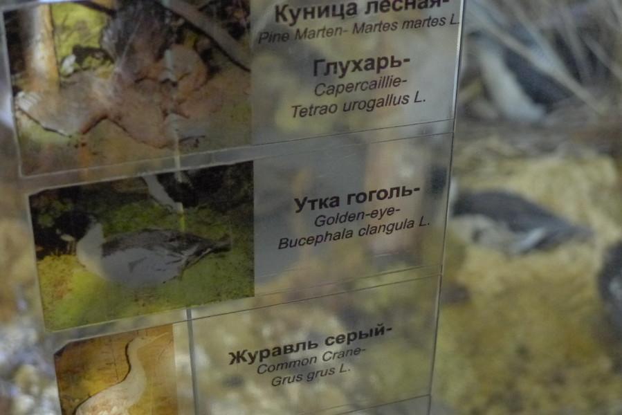 """Государственный природный заповедник """"Кивач"""""""