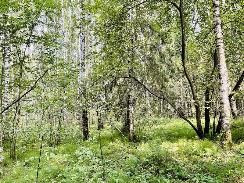 Уральская природа