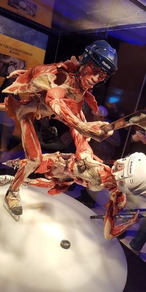 """Анатомическая выставка Body wolds (""""Мир тела"""") на ВДНХ в Москве"""