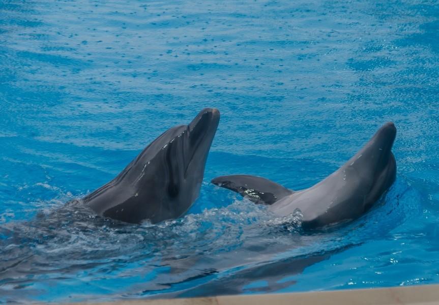 Дельфинарий в Коктебеле. Крым