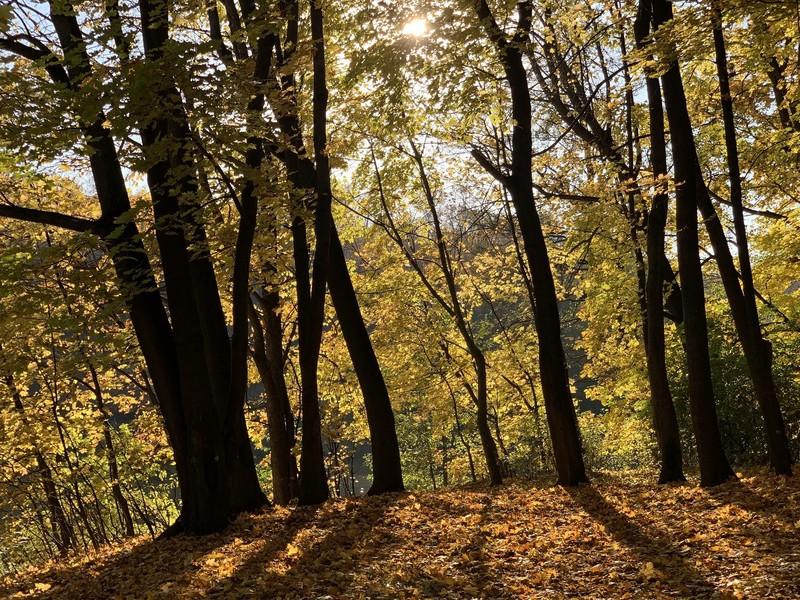 Осень в Кузьминском парке