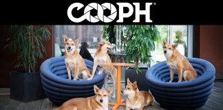 8-tips-for-dog-photography