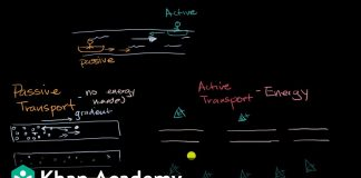 Introduction-to-passive-and-active-transport-High-school-biology-Khan-Academy