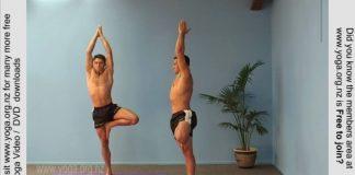 Tree-pose-Yoga-Posture