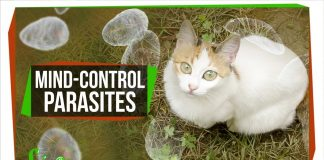 How-Mind-Controlling-Parasites-Teach-Us-About-Brains