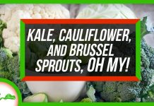 Kale-Cauliflower-and-Brussels-Sprouts-Are-the-Same-Species