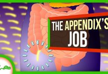 Your-Appendix-Isn39t-Useless-After-All