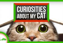 Your-Cat-Questions-Answered-Compilation