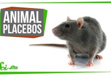 Do-Placebos-Work-For-Animals-Yes-Weirdly-Enough