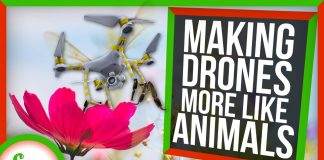 How-Studying-Animals-Is-Helping-Us-Make-Better-Drones