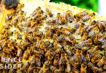 Why-Bees-Going-Extinct-Could-Mean-No-More-Ice-Cream-Or-Avocados
