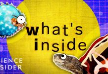 What39s-Inside-These-8-Unique-Creatures