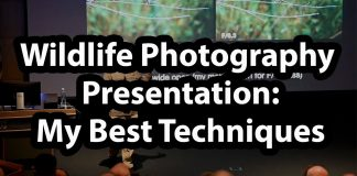 Wildlife-Photography-Presentation-Best-Techniques