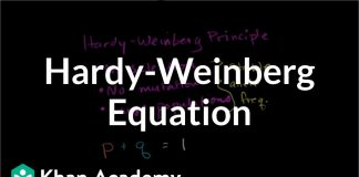 Hardy-Weinberg-equation-Biomolecules-MCAT-Khan-Academy