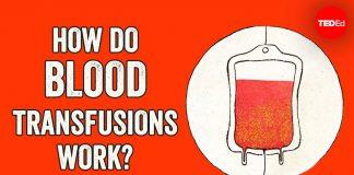 How-do-blood-transfusions-work-Bill-Schutt