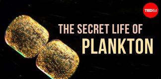 The-Secret-Life-of-Plankton